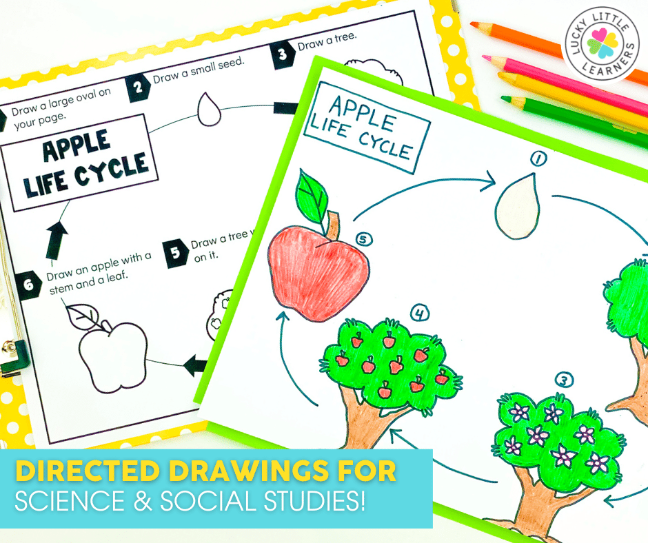apple life cycle directed drawing